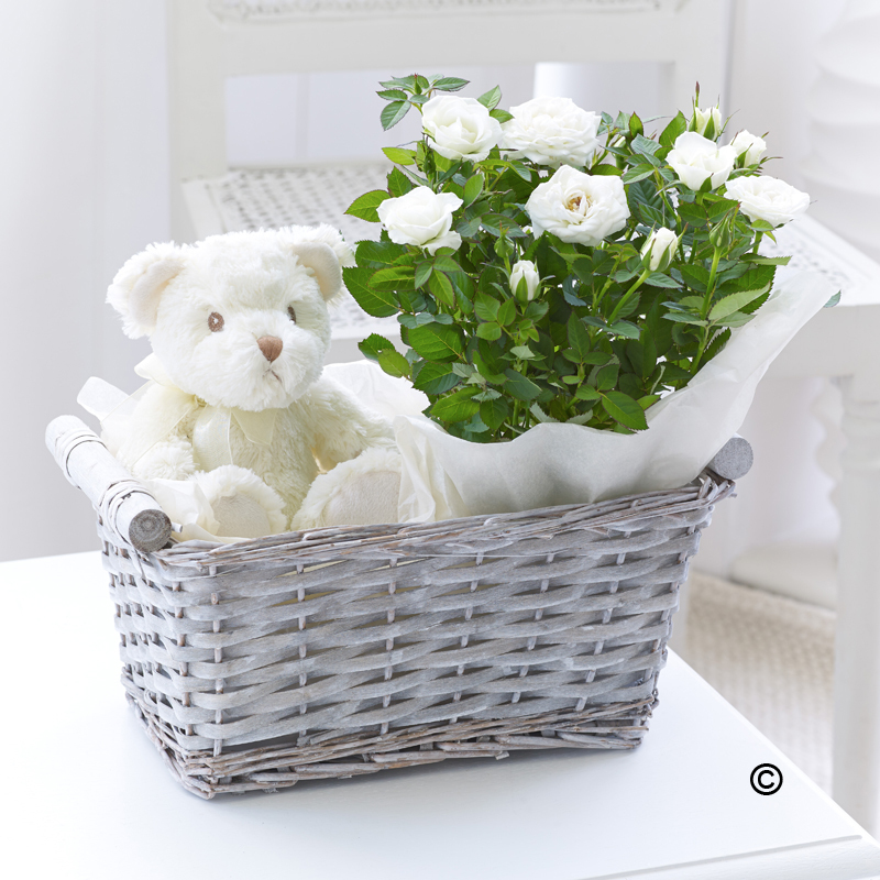 Baby Gift Basket Co : Baby gift basket june the florist southportjune