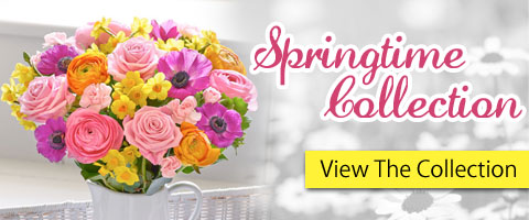 Junes spring 2016 Home Page Feature Box