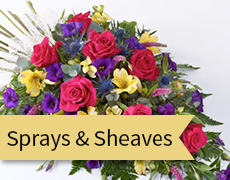 sprays and sheaves feature